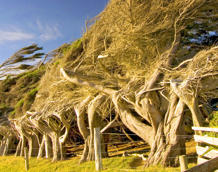 Windswept trees - 30 April webinar - 7 Ways to Build Resilience with Dr Chris Johnstone